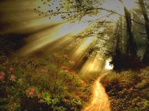 narrow-path-sun-rays-a